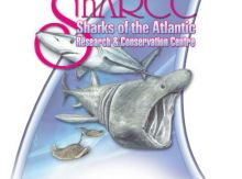 sharcc_logo
